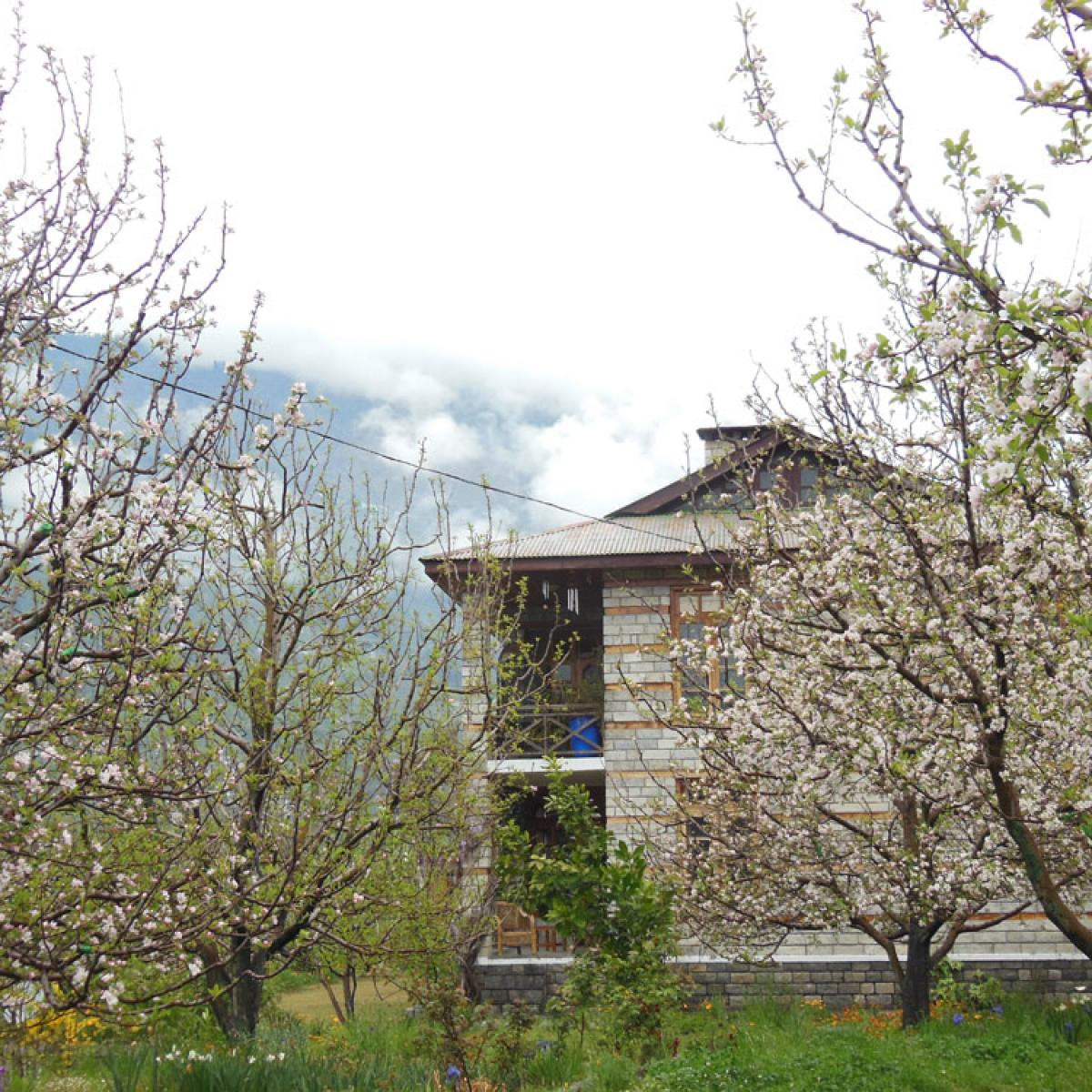 Homestaymanali Two Bedroom Cottage Manali 8