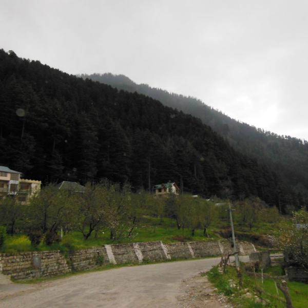 Premier Cottage No.5 - Rustic Cottage in Manali surrounded by Apple Trees